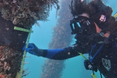 Underwater Inspection in Puerto Rico